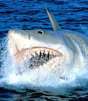 Jaws Movie Featured Image