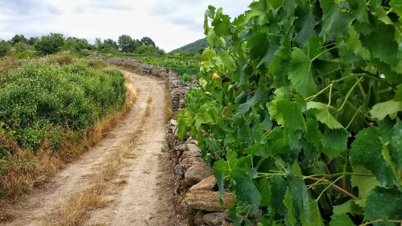 Visitare la Galicia_Ribeira Sacra