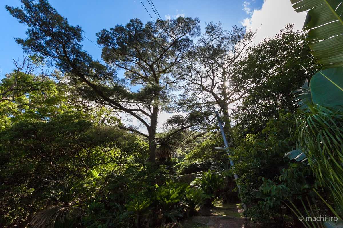 琉球石垣 入り口付近全景写真