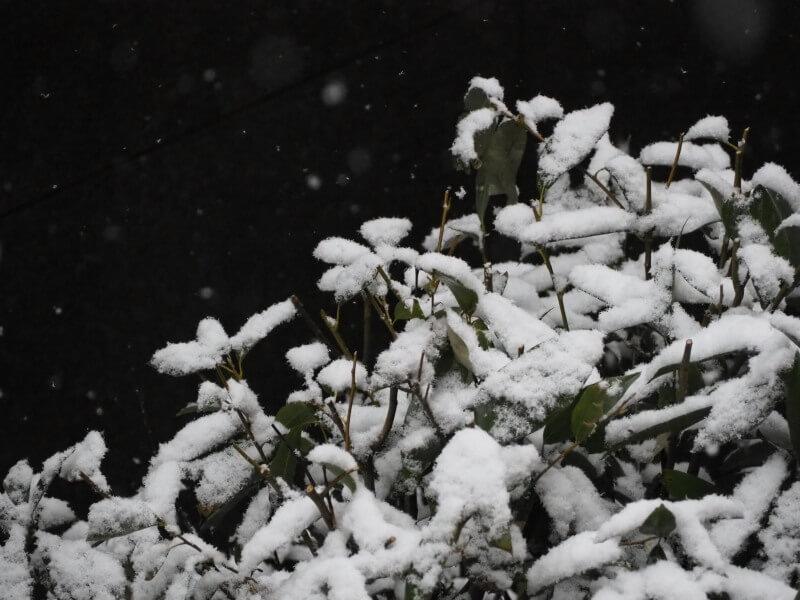 つくばの儚い雪景色