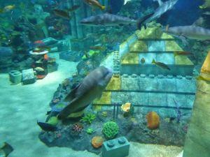 本物のサメやエイが泳いでいました