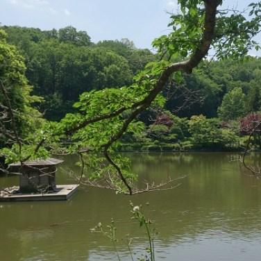 町田 薬師池公園