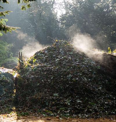 compost_heap.jpg
