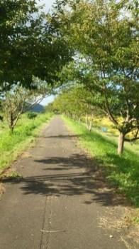 サイクリングロードで お散歩中です♪(東舘 女性)