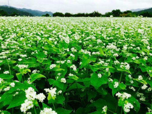 蕎麦畑(山野井 男性)