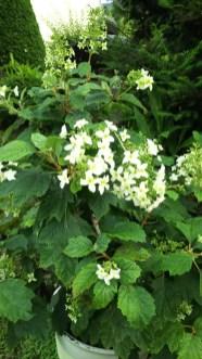 大好きな花たち。(関岡・女性)