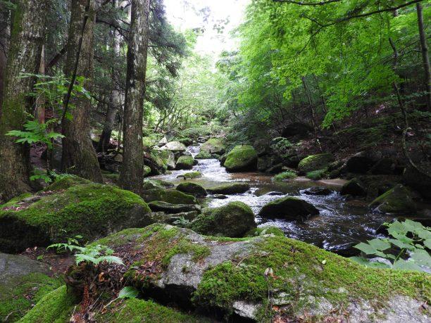 Takigawa Valley is a beautiful place. I enjoyed hiking with my friend.(滝川渓谷はとても美しい場所です。私は友達と一緒にハイキングを楽しみました)