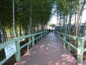 竹林とバリアフリーの通路