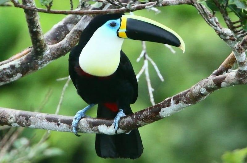 Tambopata Adventure - The Best Tambopata Tour, Ecological Adventures Manu, Pyramids of Paratoari
