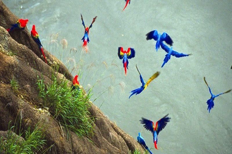 Tambopata Adventure - The Best Tambopata Tour, Ecological Adventures Manu