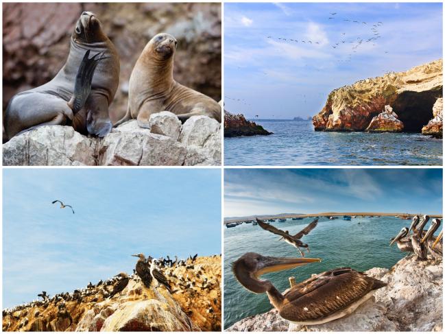 Reserva-Marinha-Paracas-ilhas-balestras