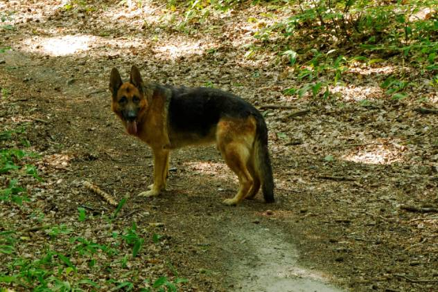 Zwierzaki_2010-08-01 10-47-38