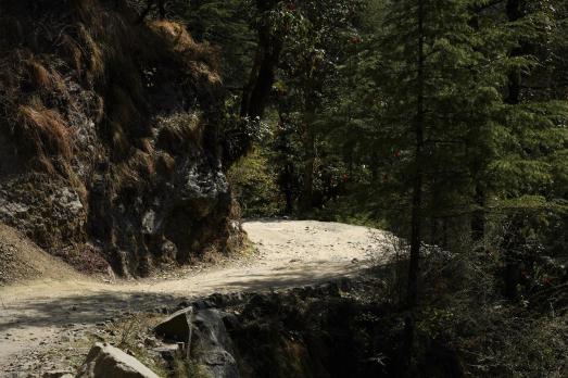 Indie-Himalaje-dzień-szósty.-26.03.2019-Fot-Maciej-Załuski-105-Copy