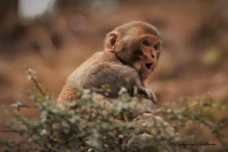 Indie Himalaje małpki ptaki mnisi joga 24.03.2019 Fot. Maciej Załuski