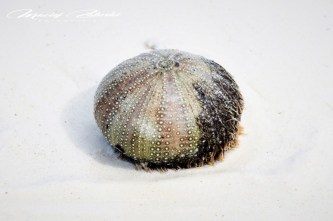 Zanzibar-Masajowie-Masajki-Ocean-Owoce-warzywa-plaża-ludzie-Małpka-Fot.Macie-50