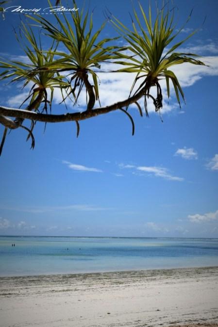 Zanzibar-Masajowie-Masajki-Ocean-Owoce-warzywa-plaża-ludzie-Małpka-Fot.Macie-9