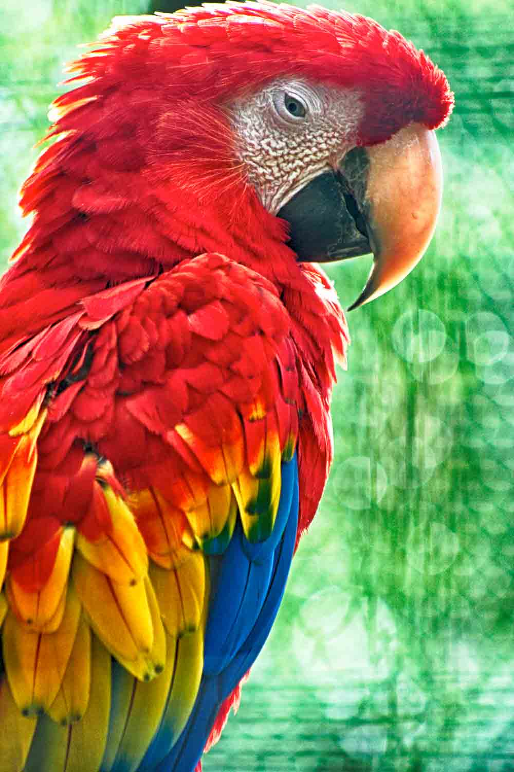 Parrot, Costa Rica, Animal, Las Paz,