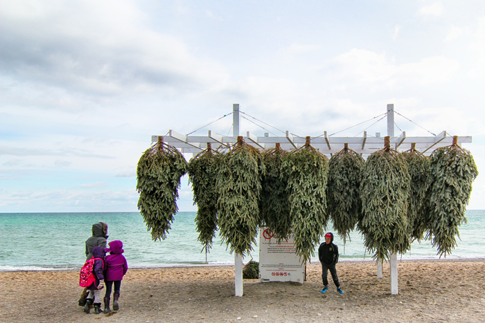North, Winter Stations, the Beaches, Toronto, #WeTheNorth, Christmas Trees, Family, Waterfront, Winter