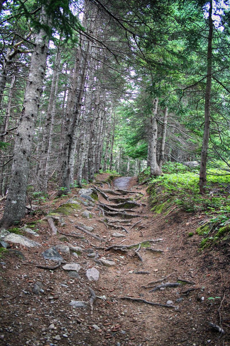 Woods, Roots, Hike, Climb