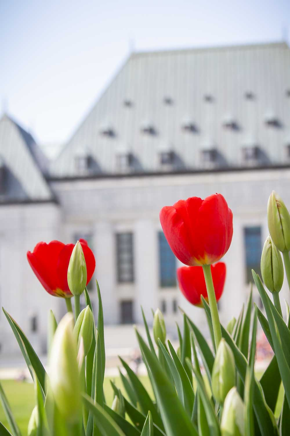 Supreme, Court, Canada, Tulips, Festival, Red