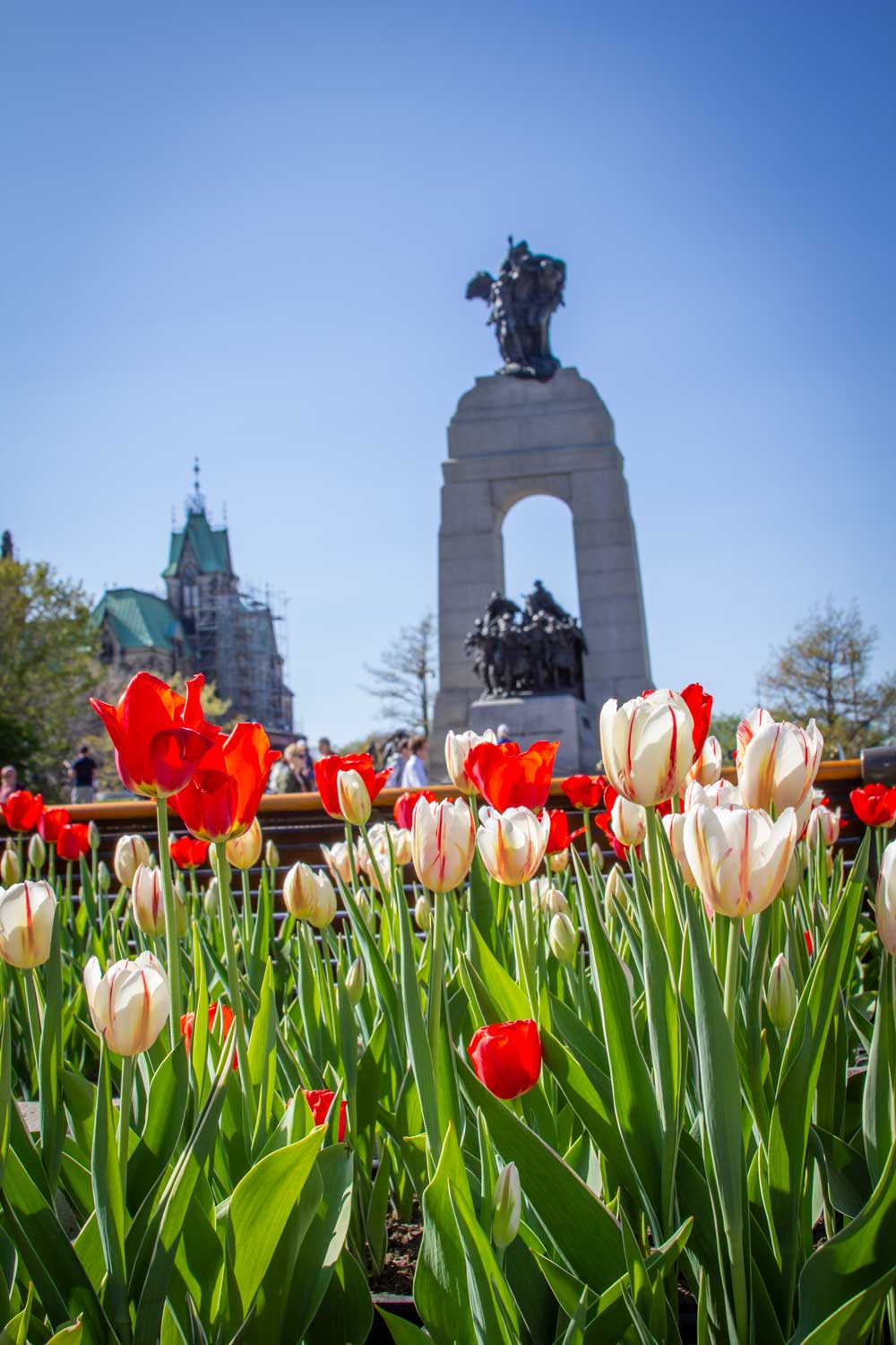 Canadian War Memorial, Tulips, Canadian, Tulip, Festival