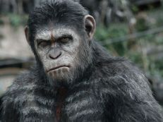 """Caesar (Andy Serkis) has grown from his days as leader of a primate rebellion in 2011's 'Rise of the Planet of the Apes.' """"We see him as a statesman and a leader and someone who has galvanized all of these apes,"""" says Serkis. """"We see the beginning of their world."""" Director Matt Reeves is impressed by Caesar's care-worn face. """"You can see a real haunted quality."""""""
