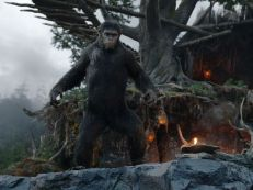 The highly intelligent ape Caesar (Andy Serkis) is the leader of the ape nation in 'Dawn of the Planet of the Apes.' Through the first part of the movie (out July 11), it seems clear that humans have been wiped out by a deadly virus.