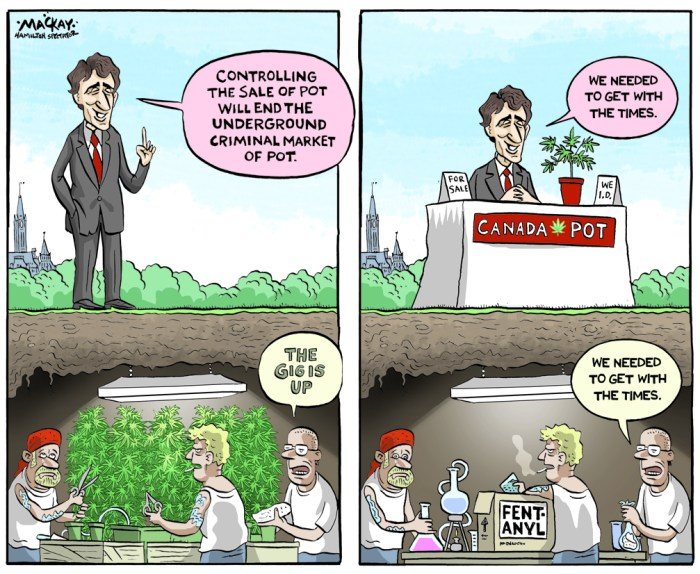 Editorial Cartoon by Graeme MacKay, The Hamilton Spectator Ð Friday September 16, 2016 Health Canada plans to restrict fentanyl chemicals Health Canada plans to restrict six chemicals used to make fentanylÊas part of OttawaÕs attempt to address what it calls the national opioid crisis. Health Minister Jane Philpott says a bill brought in by Sen. Vern White means the federal government can act quickly to make the unauthorized import and export of the chemicals illegal. In a news release, Health Canada says its regulatory proposal expeditiously achieves the intent of WhiteÕs bill. Philpott says she is also planning a summit to take place this fall to address the opioid crisis. In British Columbia, a joint task force examining the drug overdose crisis used International Overdose Awareness Day to highlight steps the province is taking on opioid overdoses. Leaders of the task force, the provincial health officer, Dr. Perry Kendall, and the director of police services, Clayton Pecknold, say long-term and first-time users are affected equally, and no one who tries illicit drugs is safe. Kendall and Pecknold say certain steps can reduce the chance of an overdose, and they are using the international awareness day as a platform to launch the first phase of B.C.Õs fight against drug deaths. They point to a new testing service to help users determine if their drugs contain potentially deadly contaminants such as fentanyl.(Source: Toronto Star)Êhttps://www.thestar.com/news/queenspark/2016/08/31/health-canada-plans-to-restrict-fentanyl-chemicals.html Canada, Justin Trudeau, marijuana, drug, legalization, fentanyl, Ottawa, criminal, opiate
