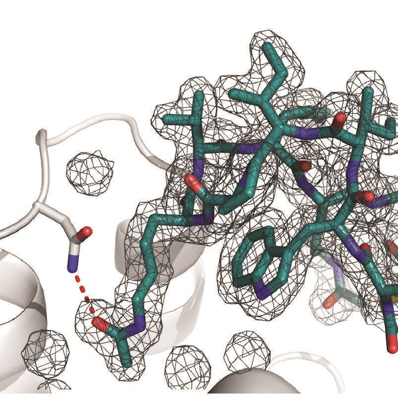 Protein design and engineering using RaPID mRNA display