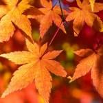 紅葉した葉っぱを食べる!? 活性酸素を抑える食材と料理