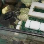 亀の水槽の浮島の動画だよ,2018.11.25