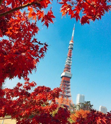 【東京タワー・芝公園・東京】東京タワーと紅葉と芝公園,2018,動画