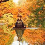 【日比谷公園・東京】皇居の近くで紅葉が楽しめる広い公園 2018.11
