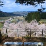 眺望 絶景 北向観音からの桜並木 秋田県