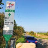 【ドローン】ジェットコースターの路 北海道 紅葉ドライブ 2019