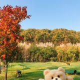 ~北海道の紅葉~層雲峡~紅葉ドライブ2019北海道,その1