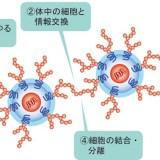 【糖鎖】免疫システムの要・糖鎖について