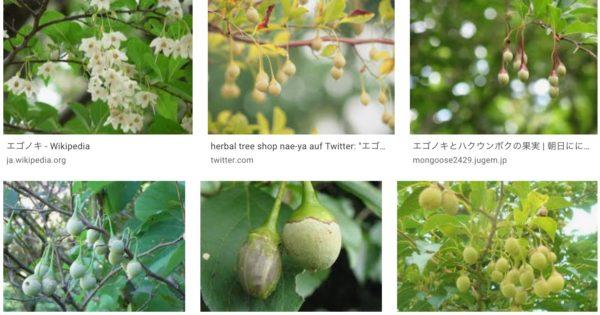 【白い花】エゴノキ