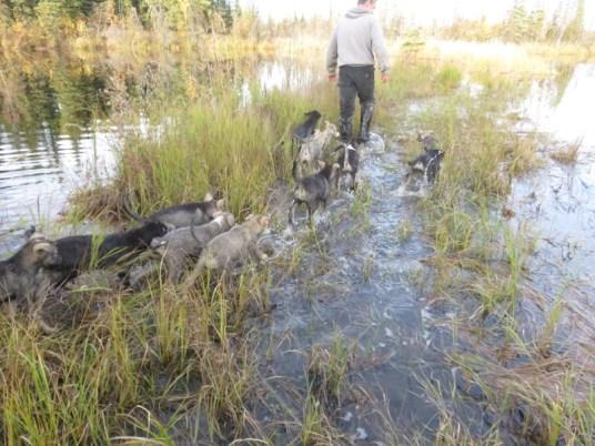 Swamp walking