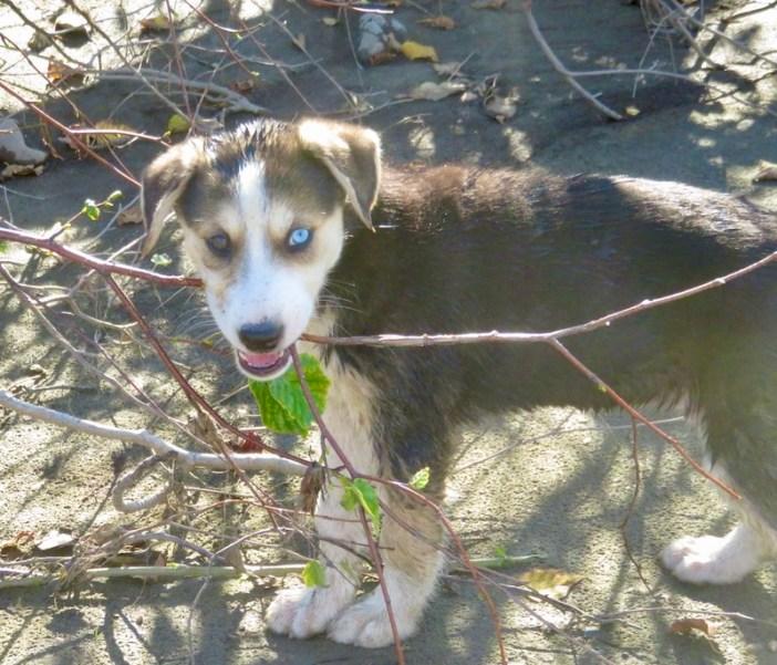 Ava age 8 weeks
