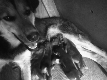 Smarty & her 6 beautiful puppies