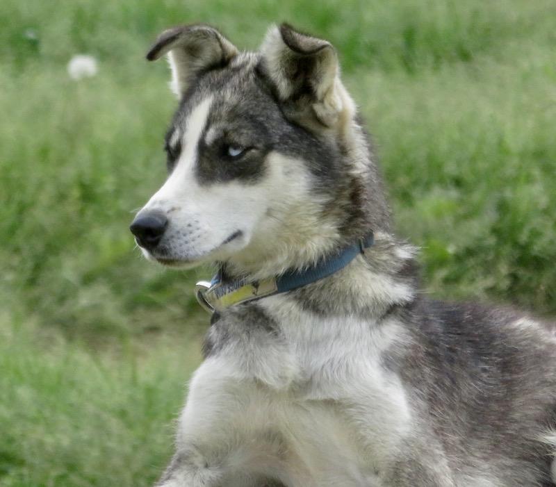 Odessa age 14 months.