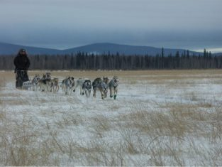 Training in Nenana January 2015