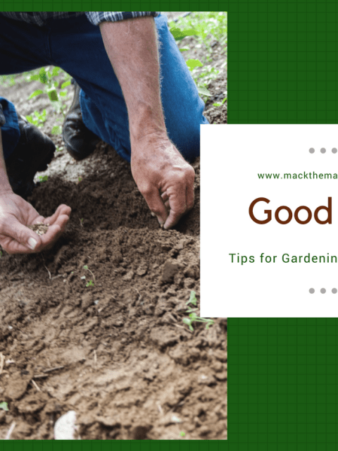 Good Soil - Tips for Planting Seeds in Soil