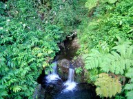 A Small Stream at Akaka Falls State Park