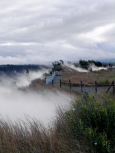 Steaming Bluff