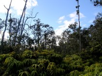 The Botanical Scenery of the 'Iliahi Trail