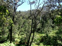 The Botanical Scenery Surrounding the Thurston Lava Tube
