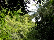 The View from Within 'Īao Valley