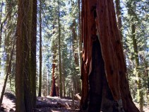 Trail of the Sequoias 2